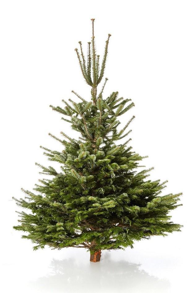 Weihnachtsbaum Nordmanntanne.Echter Weihnachtsbaum Nordmanntanne Online Kaufen Weihnachts City