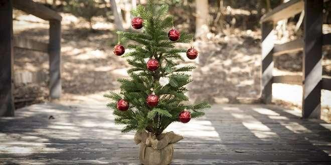 Ndr Weihnachtsbaum.Trockenheit Gefährdet Weihnachtsbäume Preisexplosion Droht